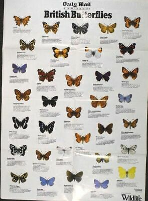 Daily Mail BBC Wildlife Magazine Collection BRITISH Butterflies Poster 84x59