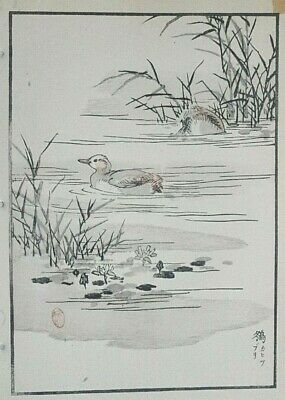 LITTLE GREBE : Print Of a 1880s JAPANESE WOODBLOCK Bird Print By BAIREI