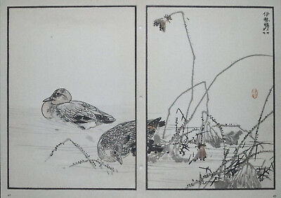 THE WIDGEON, DUCK : Print Of a JAPANESE WOODBLOCK Bird Print By BAIREI