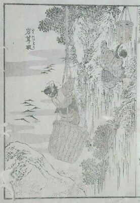 HOKUSAI MANGA - COLLECTING BIRD NESTS -  An Original Woodblock Print (Woodcut)
