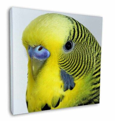 """Yellow Budgerigar, Budgie 12""""x12"""" Wall Art Canvas Decor, Picture Prin, AB-51-C12"""