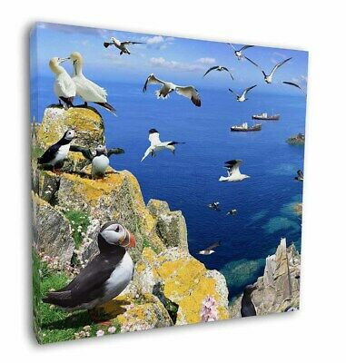 """Puffins and Sea Bird Montage 12""""x12"""" Wall Art Canvas Decor, Picture P, AB-93-C12"""