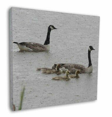 """Geese+Goslings in Heavy Rain 12""""x12"""" Wall Art Canvas Decor, Picture P, AB-G5-C12"""