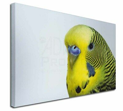 """Yellow Budgerigar, Budgie 30""""x20"""" Wall Art Canvas, Extra Large Pict, AB-51-C3020"""