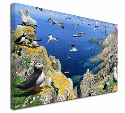 """Puffins and Sea Bird Montage 30""""x20"""" Wall Art Canvas, Extra Large P, AB-93-C3020"""