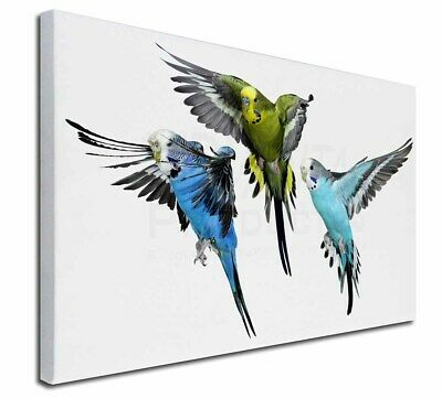 """Budgerigars, Budgies in Flight 30""""x20"""" Wall Art Canvas, Extra Large, AB-94-C3020"""