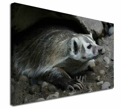 """Badger on Watch 30""""x20"""" Wall Art Canvas, Extra Large Picture Print , ABA-2-C3020"""