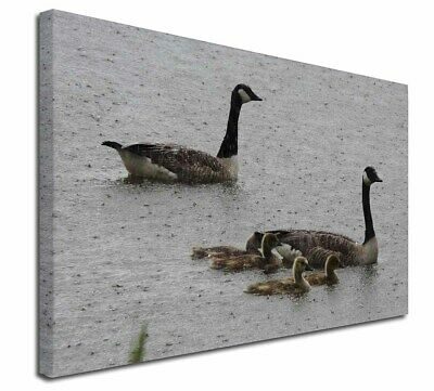 """Geese+Goslings in Heavy Rain 30""""x20"""" Wall Art Canvas, Extra Large P, AB-G5-C3020"""