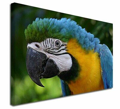 """Blue+Gold Macaw Parrot 30""""x20"""" Wall Art Canvas, Extra Large Pictu, AB-PA10-C3020"""