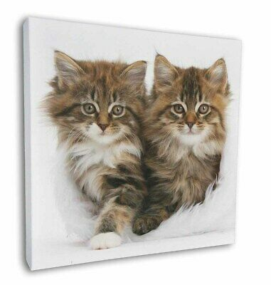"Kittens in White Fur Hat 12""x12"" Wall Art Canvas Decor, Picture Prin, AC-189-C12"