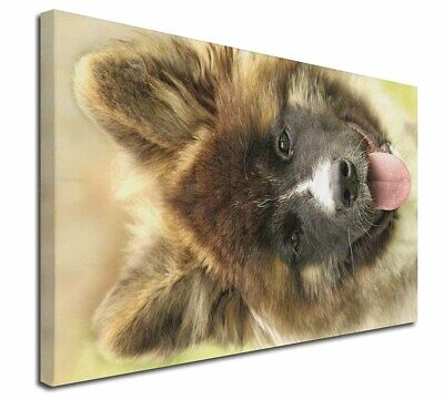 """Beautiful Akita Dog 30""""x20"""" Wall Art Canvas, Extra Large Picture Pr, AD-A4-C3020"""