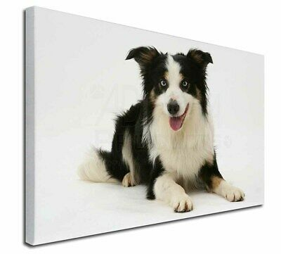 "Tri-Colour Border Collie Dog 30""x20"" Wall Art Canvas, Extra Large, AD-BC35-C3020"