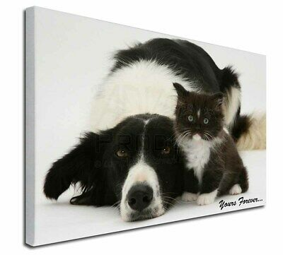 "Border Collie and Kitten 'Yours Forever' 30""x20"" Wall Art Canvas, , AD-BC7-C3020"