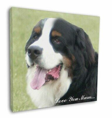 "Bernese Mountain Dog 'Love You Mum' 12""x12"" Wall Art Canvas Deco, AD-BER5lym-C12"