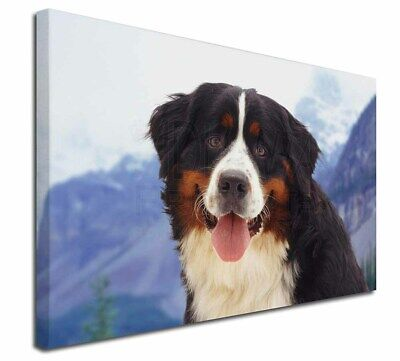 "Bernese Mountain Dog 30""x20"" Wall Art Canvas, Extra Large Picture, AD-BER6-C3020"