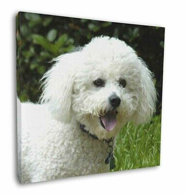 "Bichon Frise Dog 12""x12"" Wall Art Canvas Decor, Picture Print, AD-BF2-C12"