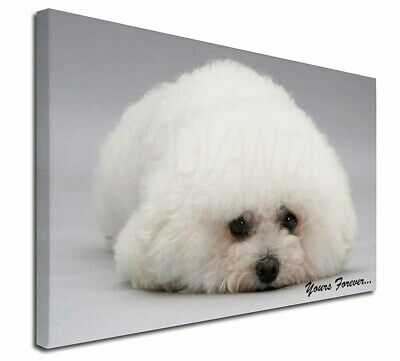 "Bichon Frise Dog 'Yours Forever' 30""x20"" Wall Art Canvas, Extra La, AD-BF3-C3020"