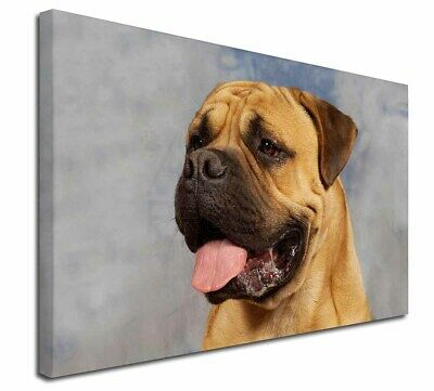 """Bullmastiff Dog 30""""x20"""" Wall Art Canvas, Extra Large Picture Prin, AD-BMT1-C3020"""