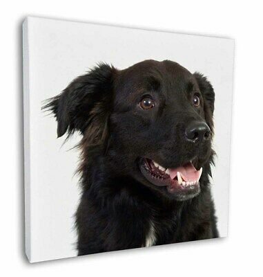 "Border Collie Dogs /'Soulmates/' 12/""x12/"" Wall Art Canvas Decor SOUL-26-C12 Pictu"