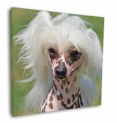 "Chinese Crested Dog 12""x12"" Wall Art Canvas Decor, Picture Print, AD-CHC4-C12"