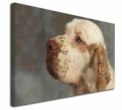 """Clumber Spaniel Dog 30""""x20"""" Wall Art Canvas, Extra Large Picture P, AD-CS1-C3020"""