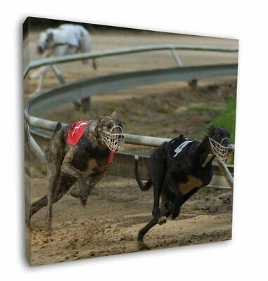 "Greyhound Dog Racing 12""x12"" Wall Art Canvas Decor, Picture Print, AD-GH1-C12"
