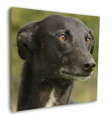 "Greyhound Dog 12""x12"" Wall Art Canvas Decor, Picture Print, AD-GH2-C12"