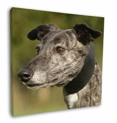 "Greyhound Dog 12""x12"" Wall Art Canvas Decor, Picture Print, AD-GH3-C12"