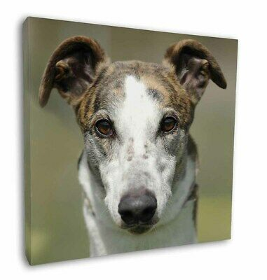 "Greyhound Dog 12""x12"" Wall Art Canvas Decor, Picture Print, AD-GH5-C12"
