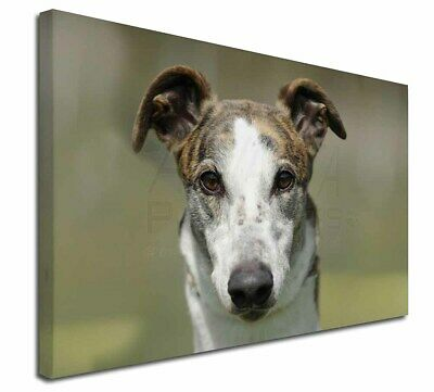 "Greyhound Dog 30""x20"" Wall Art Canvas, Extra Large Picture Print D, AD-GH5-C3020"