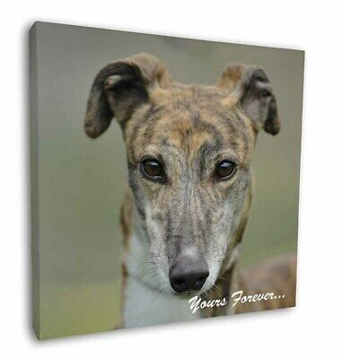 "Brindle Greyhound 'Yours Forever' 12""x12"" Wall Art Canvas Decor, Pi, AD-GH7y-C12"