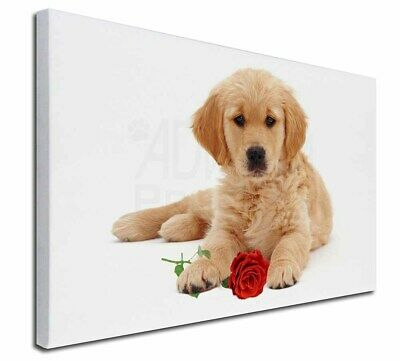 """Golden Retriever Dog with Rose 30""""x20"""" Wall Art Canvas, Extra La, AD-GR54R-C3020"""