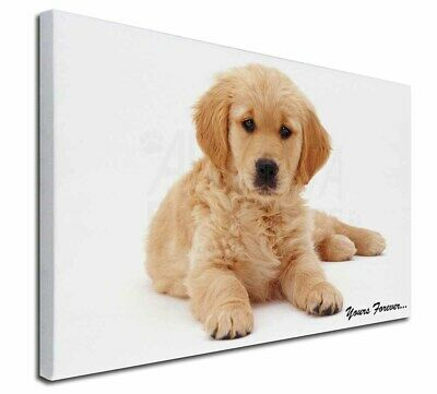 """Golden Retriever 'Yours Forever' 30""""x20"""" Wall Art Canvas, Extra L, AD-GR60-C3020"""