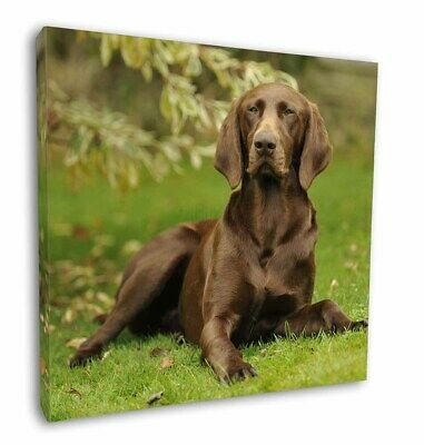 "German Pointer Dog 12""x12"" Wall Art Canvas Decor, Picture Print, AD-GSP1-C12"