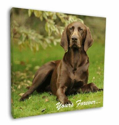 "Brown German Pointer 'Yours Forever' 12""x12"" Wall Art Canvas Decor, AD-GSP1y-C12"