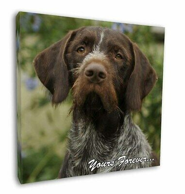 "German Wirehair Pointer 'Yours Forever' 12""x12"" Wall Art Canvas De, AD-GWP1y-C12"