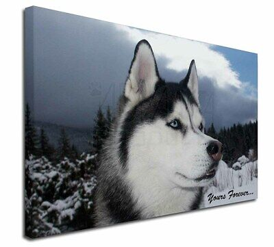"""Siberian Husky Dog 'Yours Forever' 30""""x20"""" Wall Art Canvas, Extra, AD-H52y-C3020"""