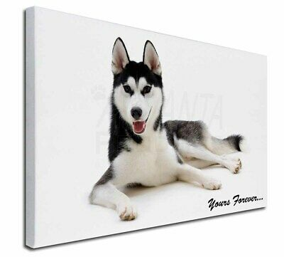 """Siberian Husky 'Yours Forever' 30""""x20"""" Wall Art Canvas, Extra Lar, AD-H55y-C3020"""