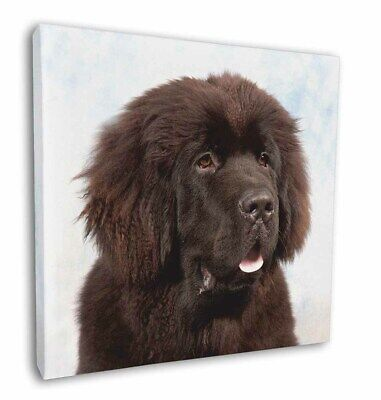 "Newfoundland Dog 12""x12"" Wall Art Canvas Decor, Picture Print, AD-NF1-C12"