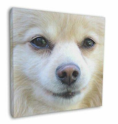 """Japanese Spitz Dog 12""""x12"""" Wall Art Canvas Decor, Picture Print, AD-PA61-C12"""