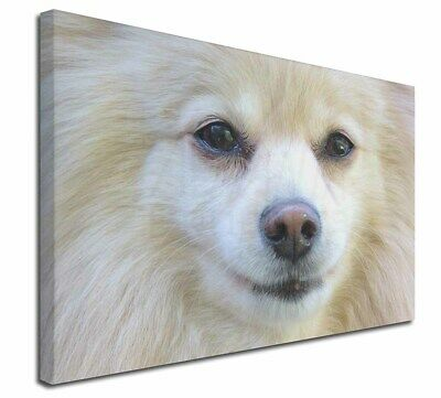 """Japanese Spitz Dog 30""""x20"""" Wall Art Canvas, Extra Large Picture P, AD-PA61-C3020"""
