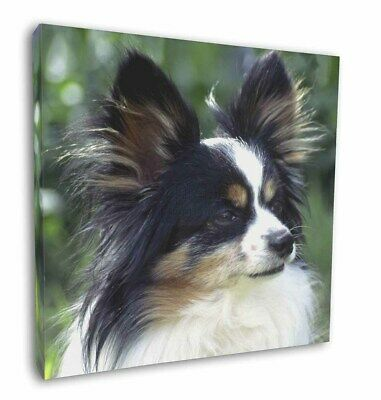 "Papillon Dog 12""x12"" Wall Art Canvas Decor, Picture Print, AD-PA62-C12"