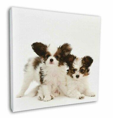 "Papillon Dogs 12""x12"" Wall Art Canvas Decor, Picture Print, AD-PA65-C12"