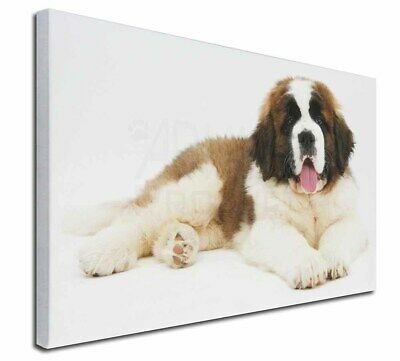 """St Bernard Dog 30""""x20"""" Wall Art Canvas, Extra Large Picture Print, AD-SBE5-C3020"""