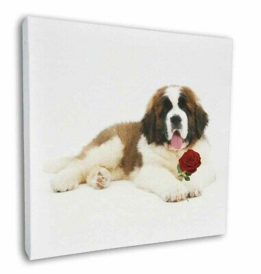 "St. Bernard Dod with Red Rose 12""x12"" Wall Art Canvas Decor, Pictu, AD-SBE5R-C12"