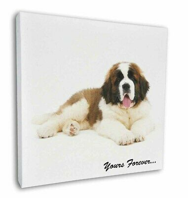 """St Bernard Dog 'Yours Forever' 12""""x12"""" Wall Art Canvas Decor, Pictu, AD-SBE6-C12"""