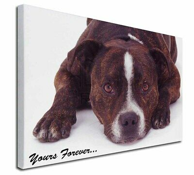 "Staff Bull Terrier 'Yours Forever' 30""x20"" Wall Art Canvas, Extra, AD-SBT7-C3020"