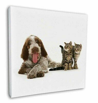 """Italian Spinone Dog and Kittens 12""""x12"""" Wall Art Canvas Decor, Pictu, AD-SP1-C12"""
