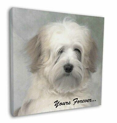 """Tibetan Terrier 'Yours Forever' 12""""x12"""" Wall Art Canvas Decor, Pict, AD-TT1y-C12"""
