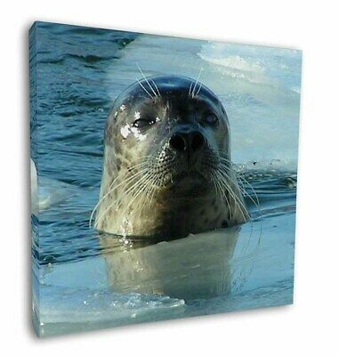 """Sea Lion in Ice Water 12""""x12"""" Wall Art Canvas Decor, Picture Print, AF-S2-C12"""